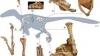 O nouă specie de dinozaur a fost descoperită după reconstituirea unui schelet găsit în România