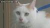 Cea mai grasă pisică din lume a murit, duminică, la New Jersey