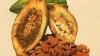 Coasta de Fildeş a interzis exportul de cacao
