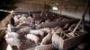 4.700 de ferme din Germania au fost închise, din cauza riscului de contaminare cu dioxină