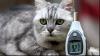 Cea mai zgomotoasă pisică din lume: Torsul ei, puternic ca un Boeing 737