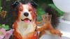 O veveriţă este obsedată de statuia unui câine VEZI FOTO