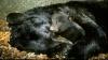 Secretele hibernării urşilor, dezvăluite de oamenii de ştiinţă VEZI VIDEO