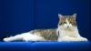 Larry a devenit pisica oficială de la Downing Street