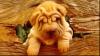 """Legea """"câinelui unic"""", în China"""