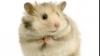 Un posibil leac împotriva calviţiei este eficient pe blana şoarecilor