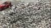Constructorii auto afectaţi de seismul din Japonia reîncep activităţile