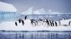 Seismul din Japonia a deplasat un gheţar din Antarctica