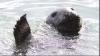 O focă salută turiştii cu lăbuţa pentru a primi peşte VEZI FOTO
