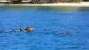 Un cal a înotat alături de un delfin VEZI VIDEO