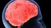 Top 9 alimente care menţin creierul în formă