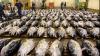 Italia a interzis importurile de alimente din Japonia
