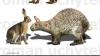 Fosilele unui iepure uriaş, descoperite în Spania