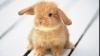 Experiment traumatizant: Au sacrificat un iepure în fața elevilor
