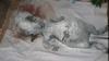 """Corpul unui """"extraterestru mort"""", descoperit în Siberia VEZI VIDEO"""