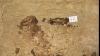 Mumiile a opt milioane de câini au fost descoperite în catacombele din Egipt