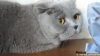 Pisica vinovată care se dă de gol cu privirea VEZI VIDEO
