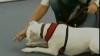 Un câine surd a învăţat toate comenzile prin limbajul semnelor VEZI VIDEO
