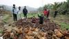 Guvernul japonez a cerut sacrificarea tuturor vitelor şi păsărilor din zona Fukushima