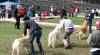 Câinii de vânătoare din Moldova apreciaţi la o expoziţie specializată