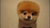 Cel mai iubit căţel: Are peste 1 milion de fani pe Facebook VEZI VIDEO