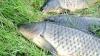 Cercetători britanici: Omul se trage din peşti