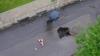 Gropile din asfalt înghit maşini  VIDEO