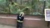 Regele animalelor îmblânzit: Un leu se joacă cu un copil la Zoo VIDEO
