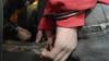 Doi moldoveni au fost arestaţi la Sankt-Petersburg pentru viol şi jaf