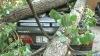 O creangă de plop a strivit trei maşini