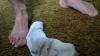 Mirosul şosetelor murdare poate combate malaria