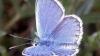 A fost descoperită o nouă specie de fluturi