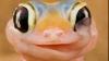 Şopârla care îşi linge ochiul, vedetă pe internet VIDEO