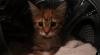 O pisicuţă a rămas în viaţă după o oră petrecută în maşina de spălat plină cu apă VIDEO