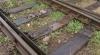 """Trenurile moldoveneşti merg """"cu viteza melcului"""" din cauza şinelor uzate. 60 % dintre acestea necesită reparaţie"""