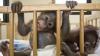 """Maimuţele """"au terorizat"""" bolnavii dintr-un spital din India"""
