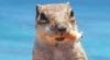 O veveriţă obraznică a furat o ţigară