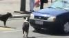 VEZI ce păţeşte un şofer care claxonează un câine VIDEO
