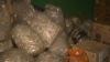 Zeci de tone de deşeuri medicale sunt depozitate în subsolurile spitalelor