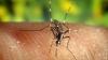 Pericol de malarie în sudul Greciei