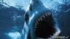 A murit sfâşiat de un rechin în timp ce se afla în luna de miere