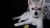 Cum reacţionează un câine după ce gustă o lămâie verde VIDEO