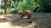 """O vulpe """"înnebunită"""" de noua prietenie cu o broască ţestoasă VEZI VIDEO"""