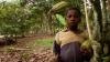 Gustul amar al ciocolatei: 100.000 de copii exploataţi fizic în țările producătoare de cacao