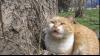 (VIDEO) Pisoiul cu miorlăitul straniu: Nu pricepi, hamăie sau miaună