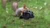 """O veveriţă """"curioasă"""" a devenit vedetă"""