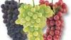 Harta vinurilor: În Moldova urmează să fie create patru zone viti-vinicole