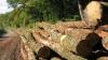 Cum să faci petrol din lemn, în doi paşi simpli
