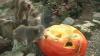 """La Grădina zoologică din Riga a avut loc competiţia pentru desemnarea """"celui mai greu dovleac"""""""