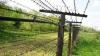 Patru migranţi au încercat să treacă ilegal frontiera pentru a ajunge în Spaţiul Schengen